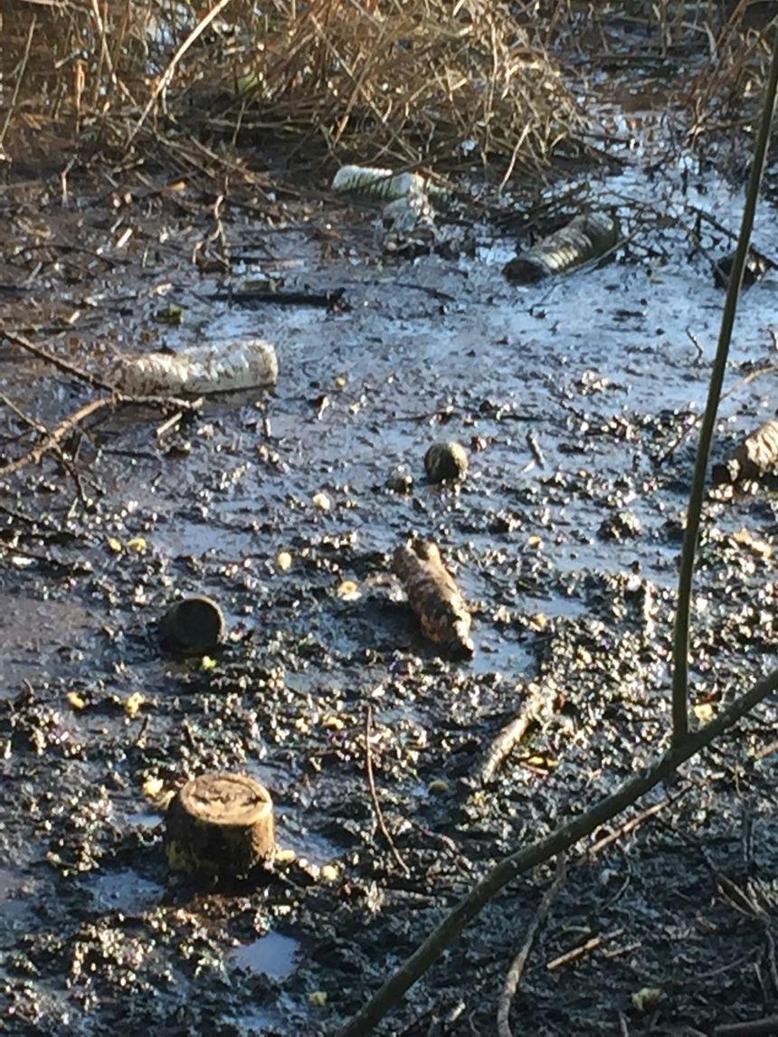 Les roselières du Lac de Créteil, saturées de détritus, dégagent une odeur nauséabonde - Collectif du Lac de Créteil