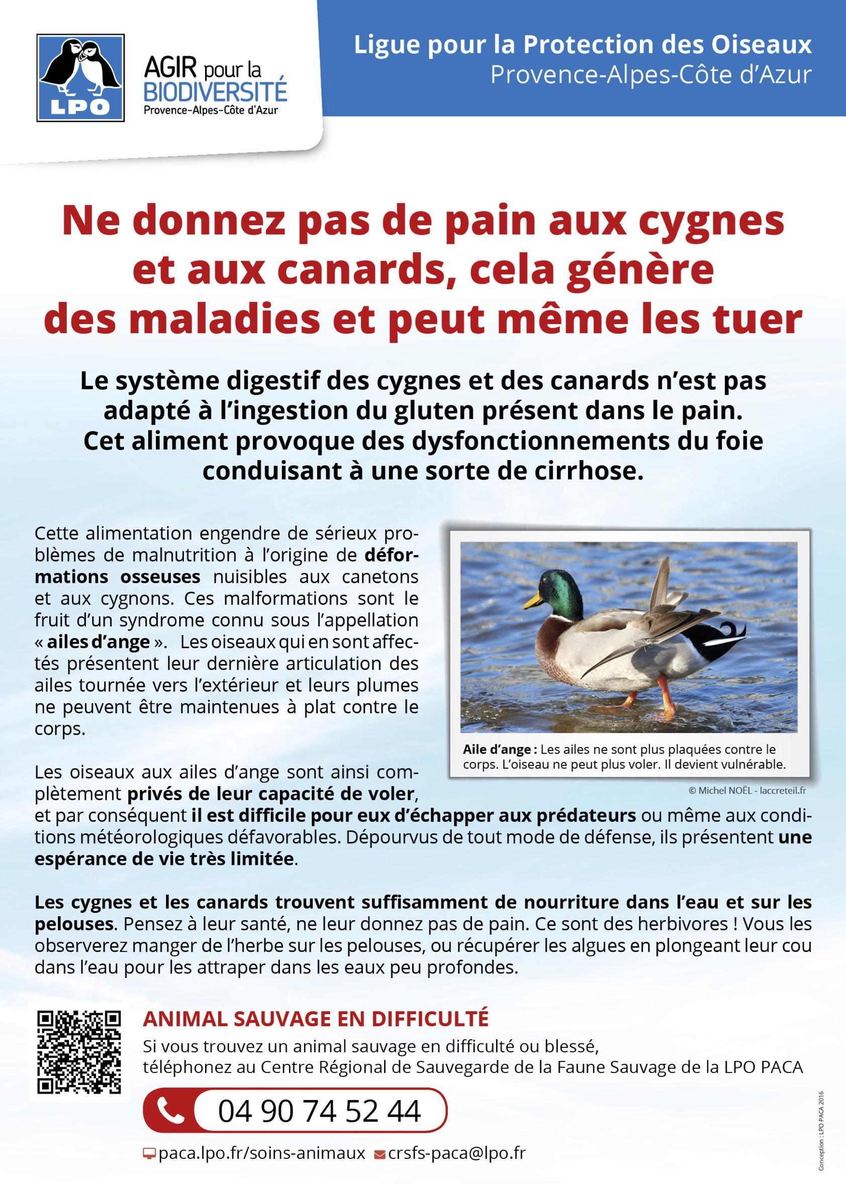 Affiche sur les DANGERS du PAIN - LPO Provence-Alpes-Côte d'Azur