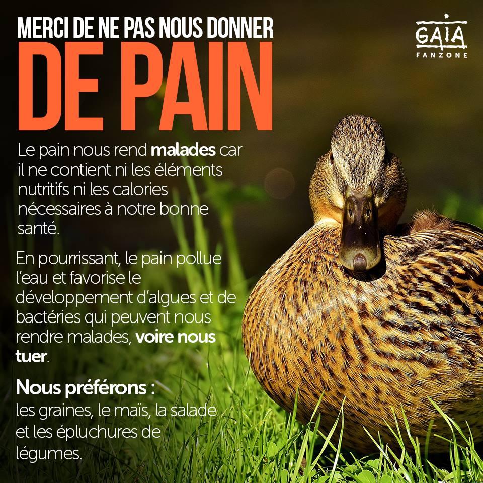 Affichage sur les DANGERS du PAIN en BELGIQUE