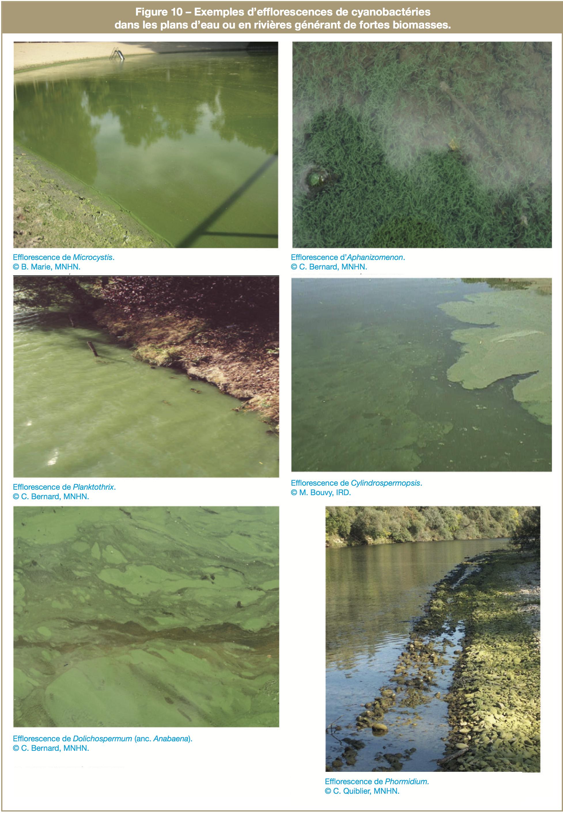 Exemples d'efflorescences de cyanobactéries dans les plans d'eau ou en rivières générant de fortes biomasses.